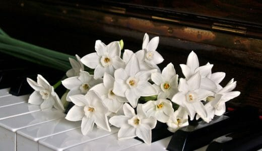 flowers_on_the_piano