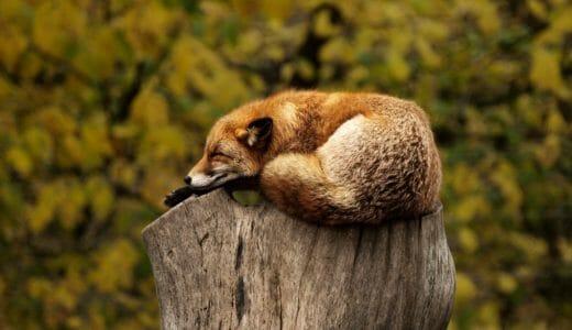 睡眠不足は勉強の敵。睡眠の質を高める習慣7選