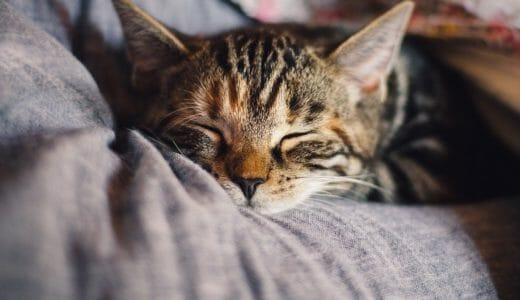 睡眠×勉強の関係を徹底解説!勉強効率を上げる3つの睡眠習慣をご紹介